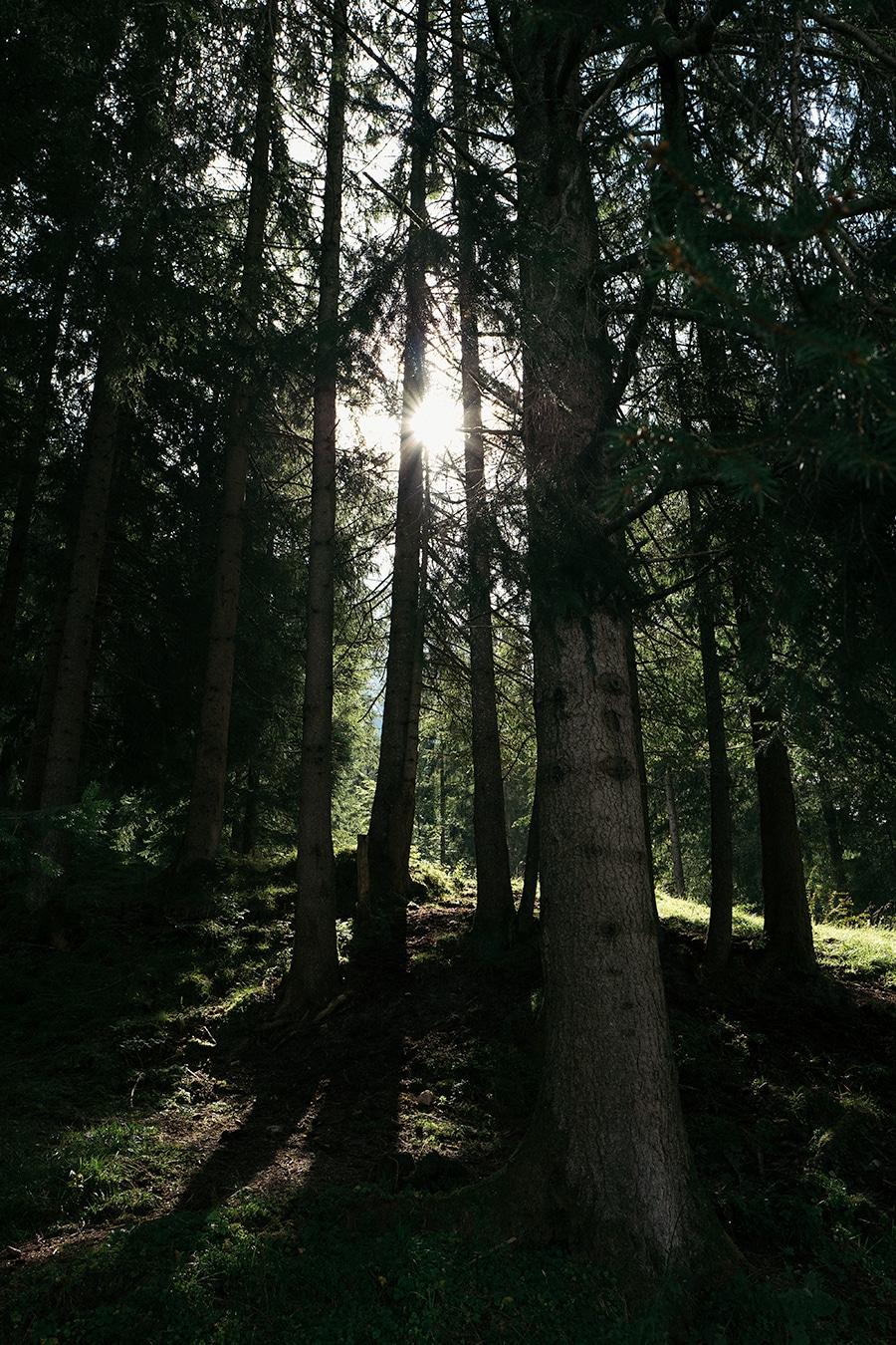 Grainau: Waldweg