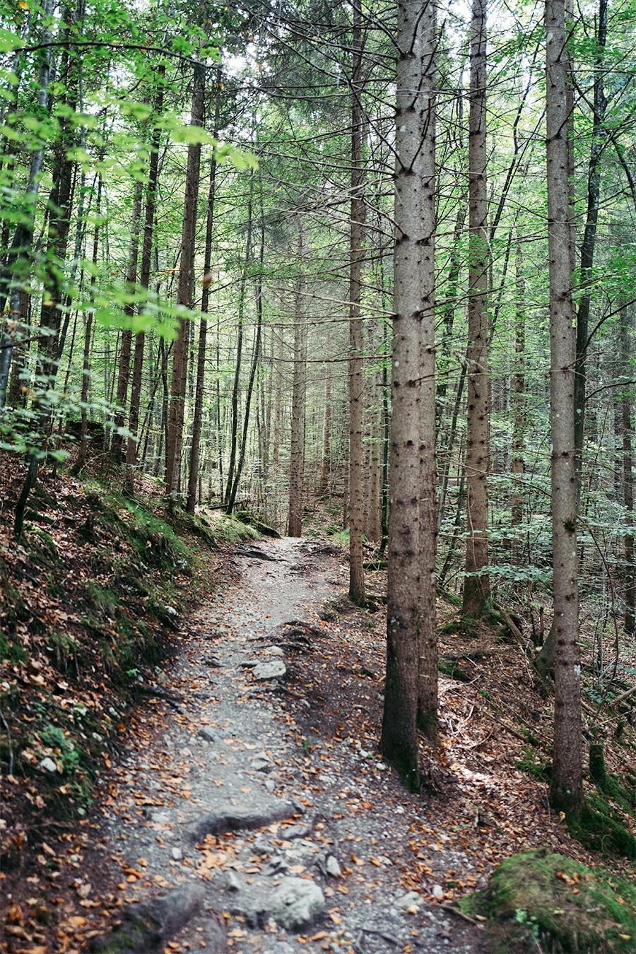 Der zauberhafte Bergwald von Grainau